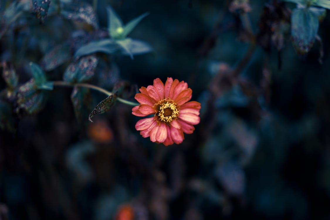 blomma, blomning, färg