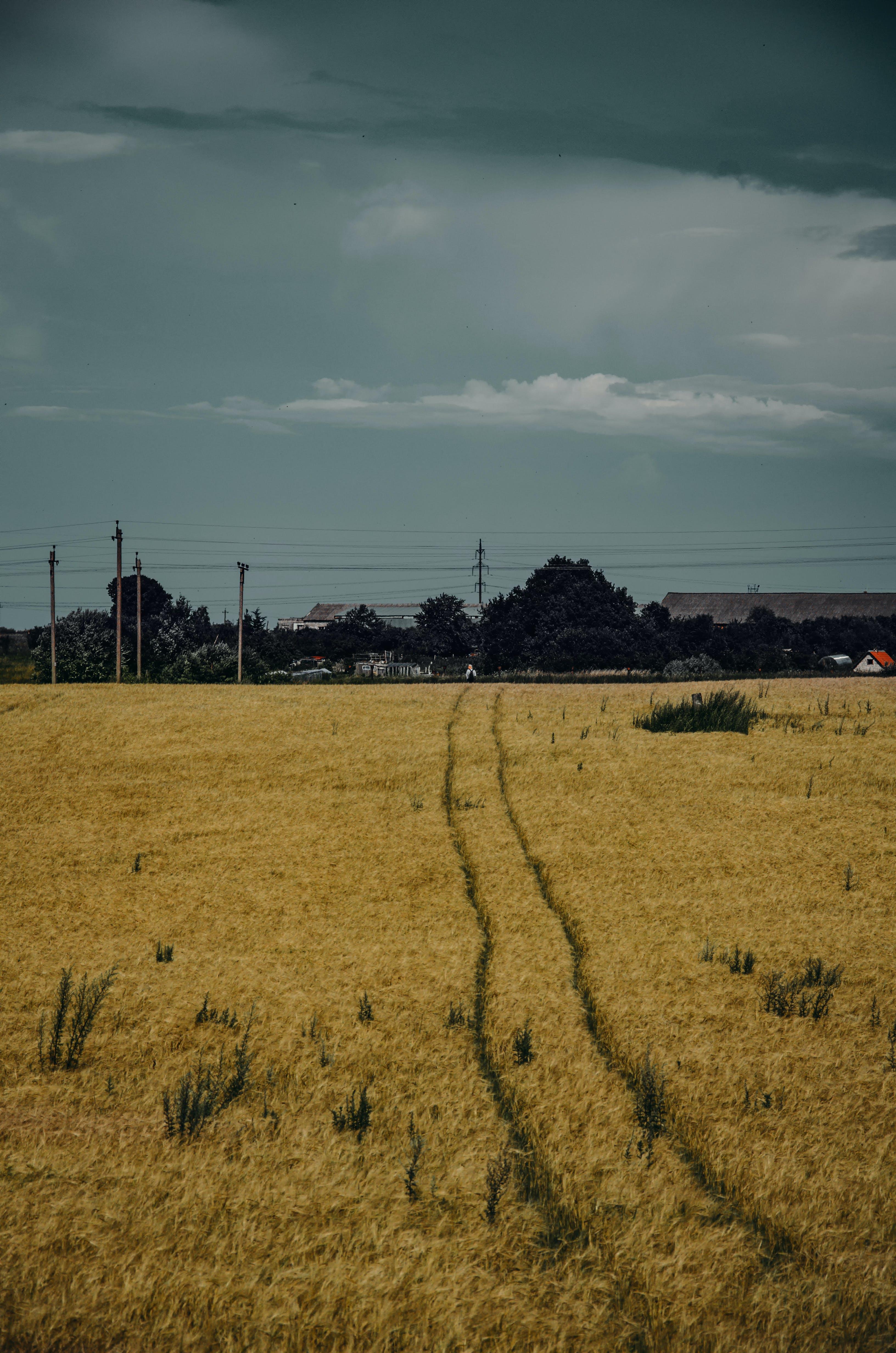 ağaçlar, alan, arazi, bitki içeren Ücretsiz stok fotoğraf