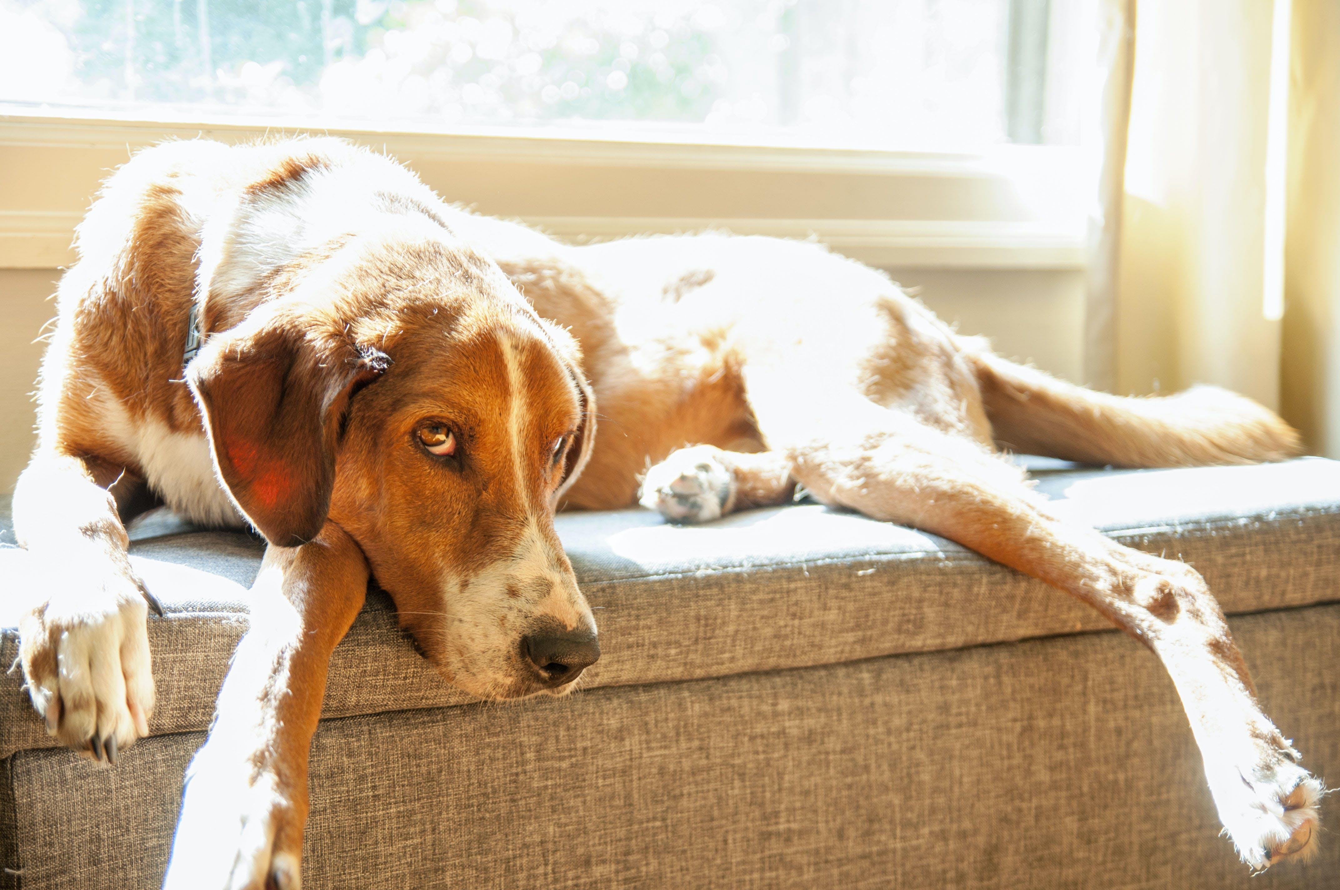 Gratis lagerfoto af dyr, hund, husdyr, kæledyr