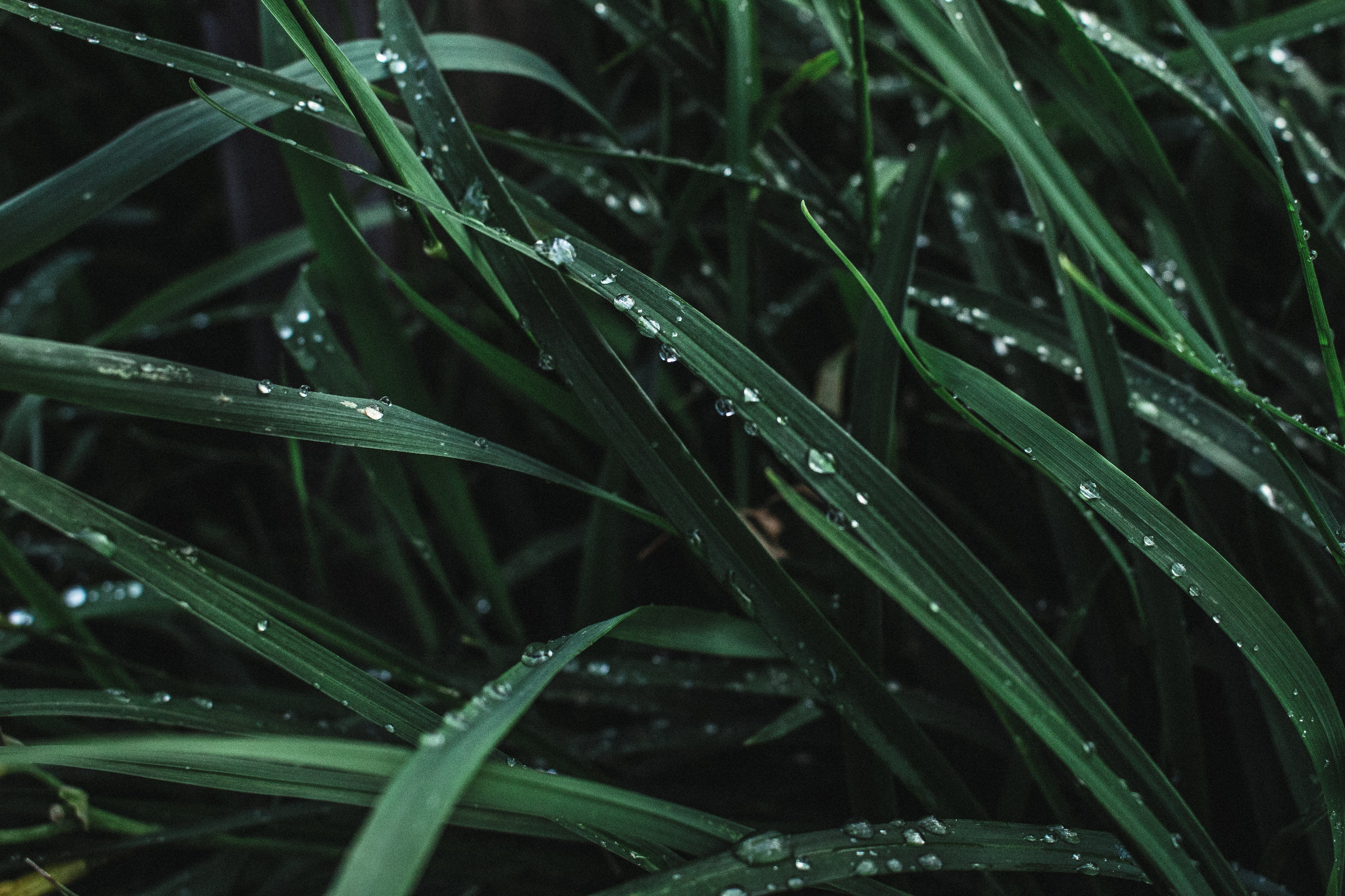 Water Drops on Grasses