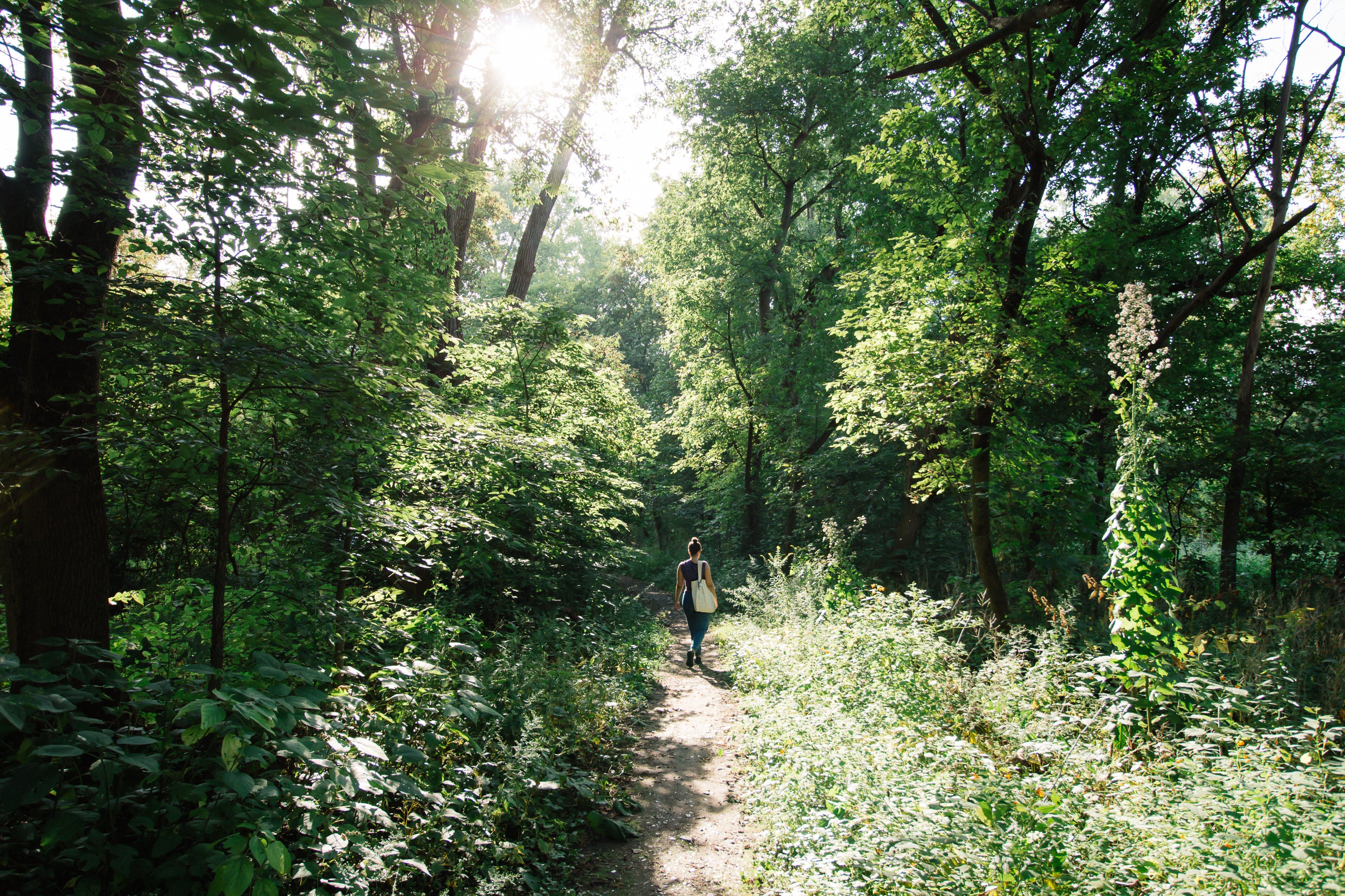 Person Walking Inside Forest