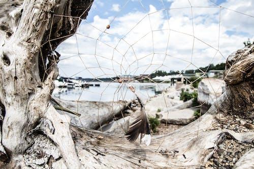 Foto profissional grátis de à beira-mar, água, apanhador de sonhos, barcos