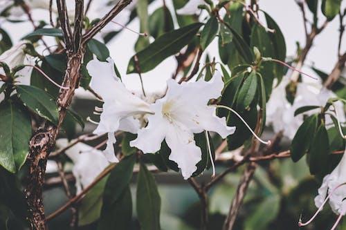 Foto profissional grátis de amor da natureza, flor branca, flores, flores bonitas