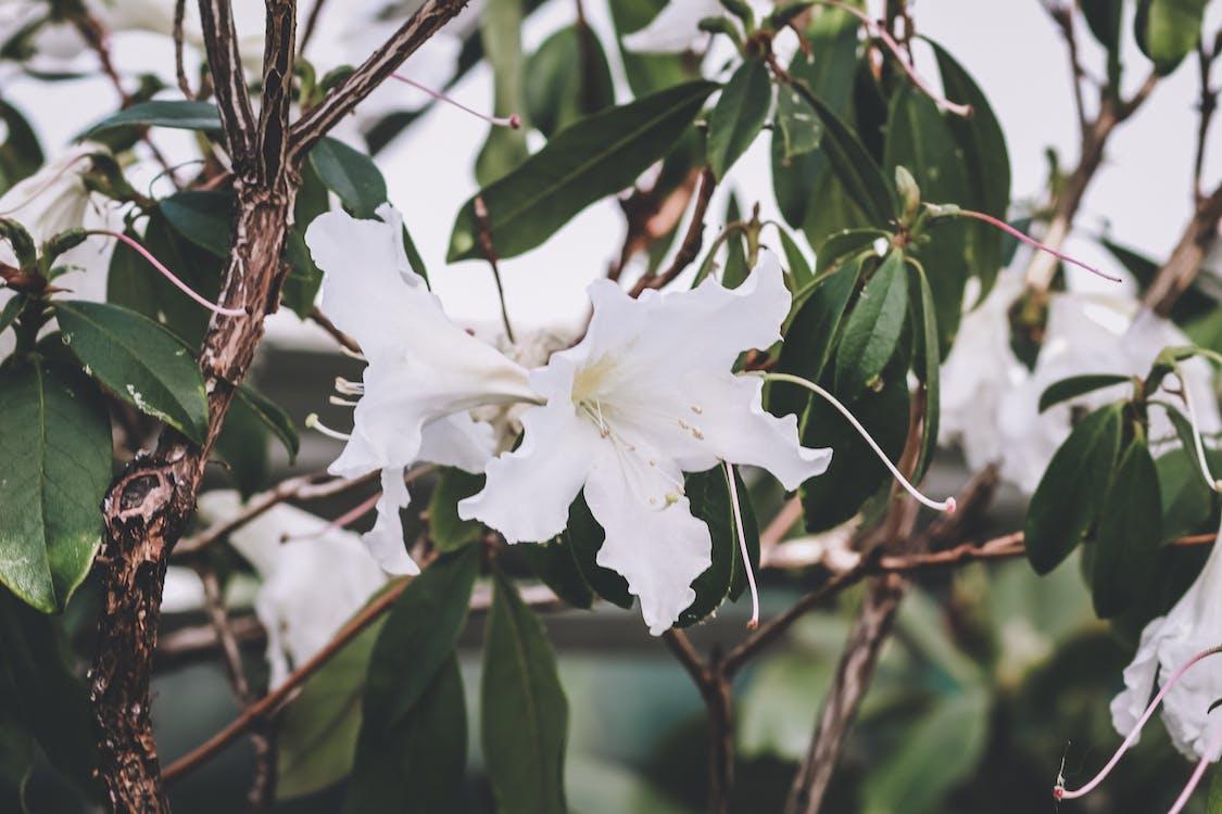 flor blanca, flors, flors boniques