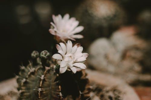 Darmowe zdjęcie z galerii z bukiet kwiatów, ciemnozielony, flora, fotografia przyrodnicza