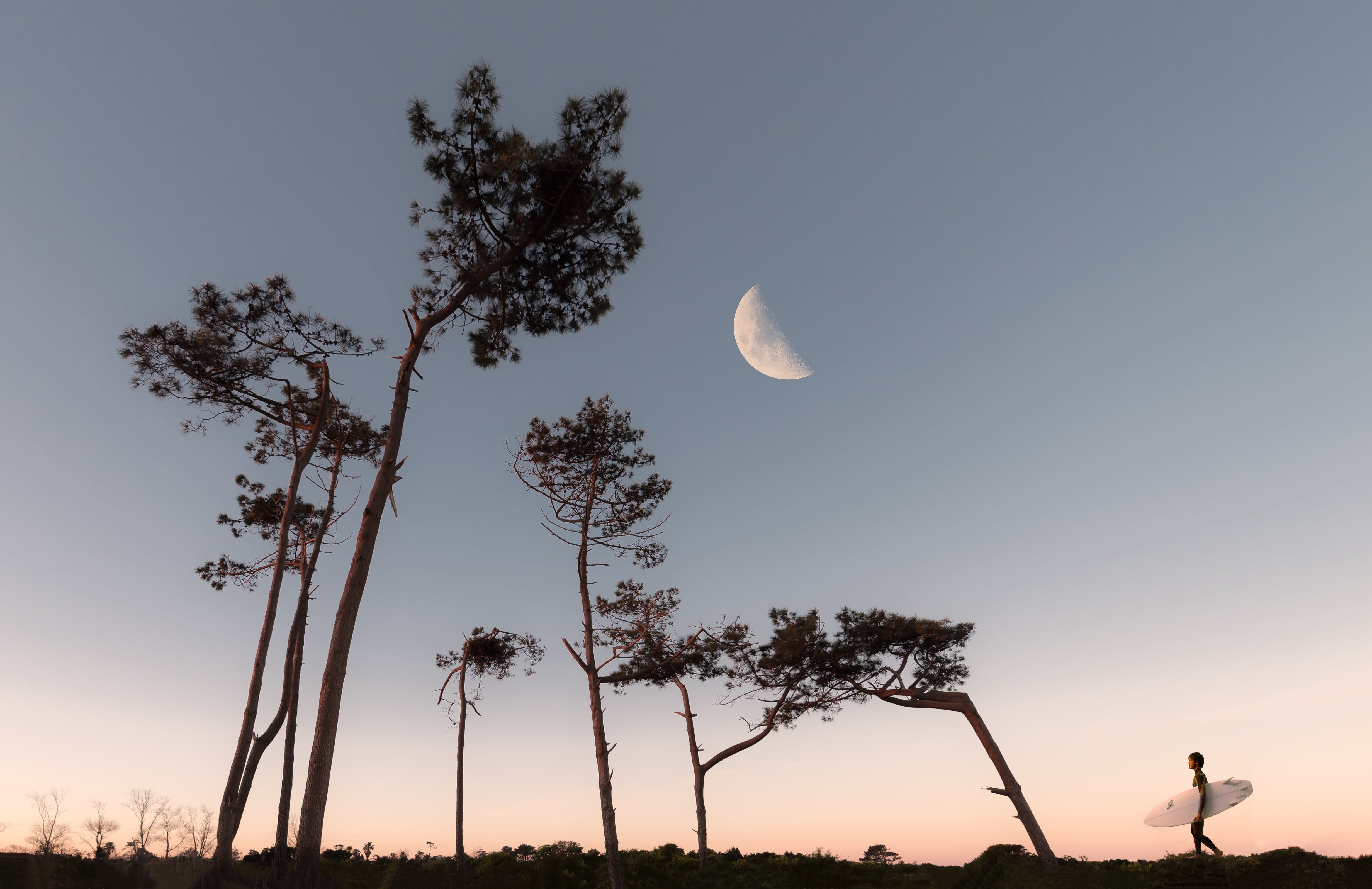 Half Moon and Silhouette of Trees