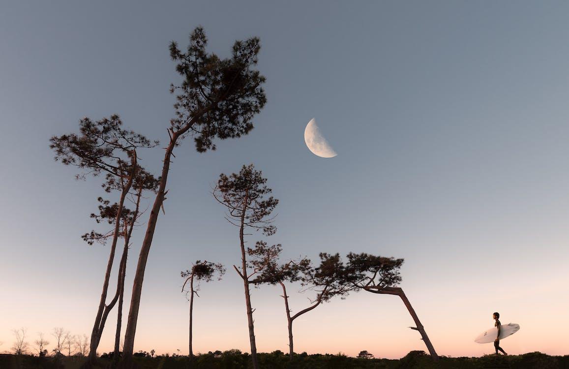baggrund, græs, halvmåne