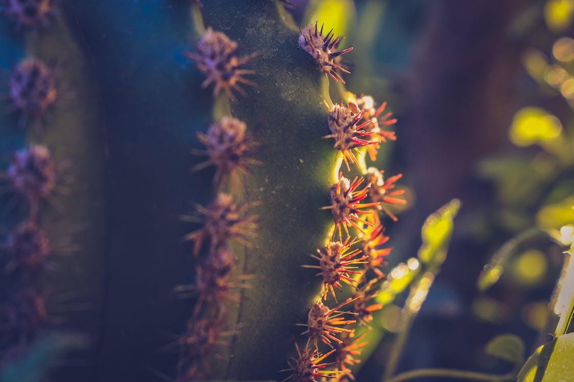 afilado, botánico, cactus
