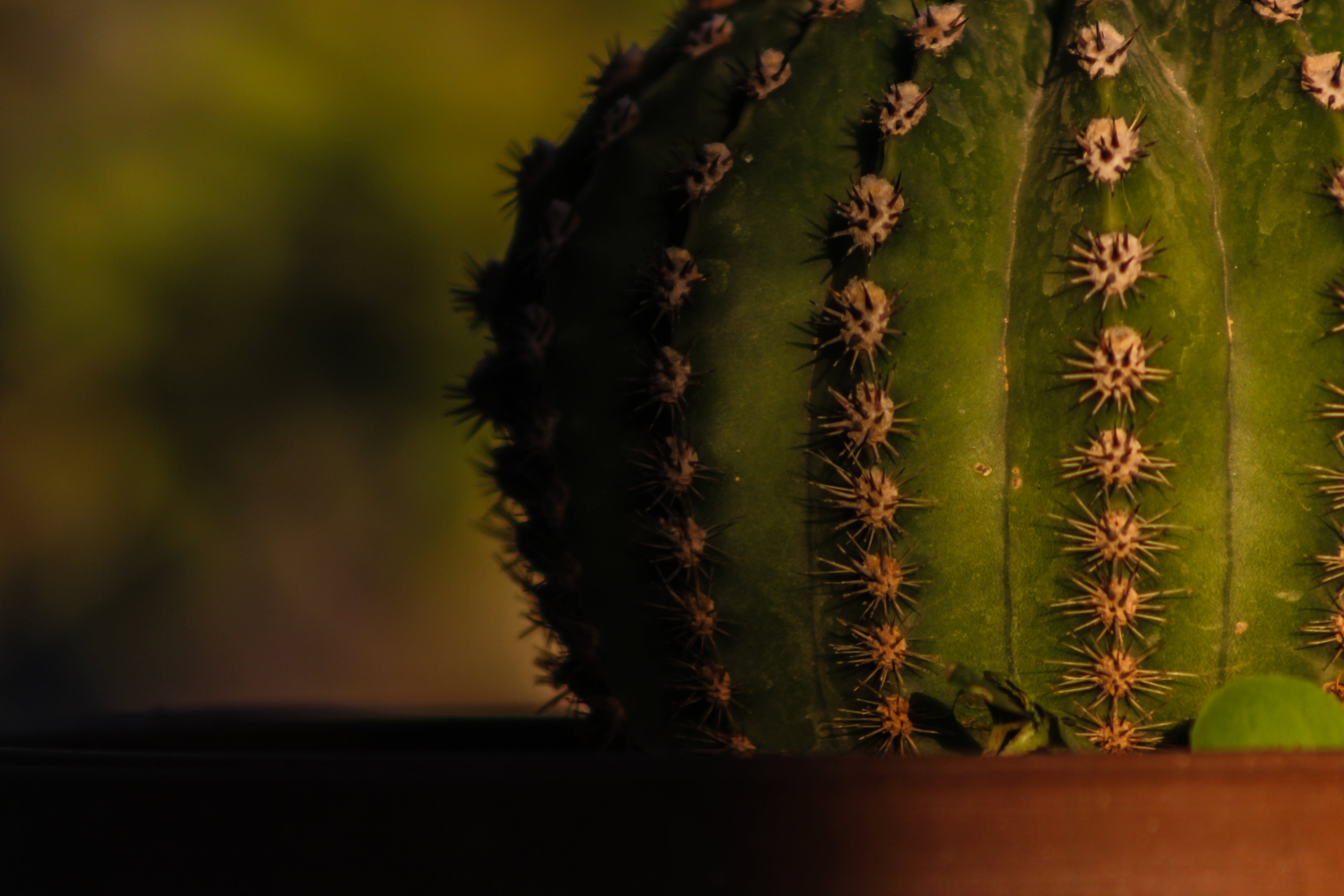 Close-up Photography of Green Cactus Plant