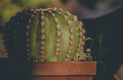 Fotobanka sbezplatnými fotkami na tému botanický, denné svetlo, detailný záber, farba