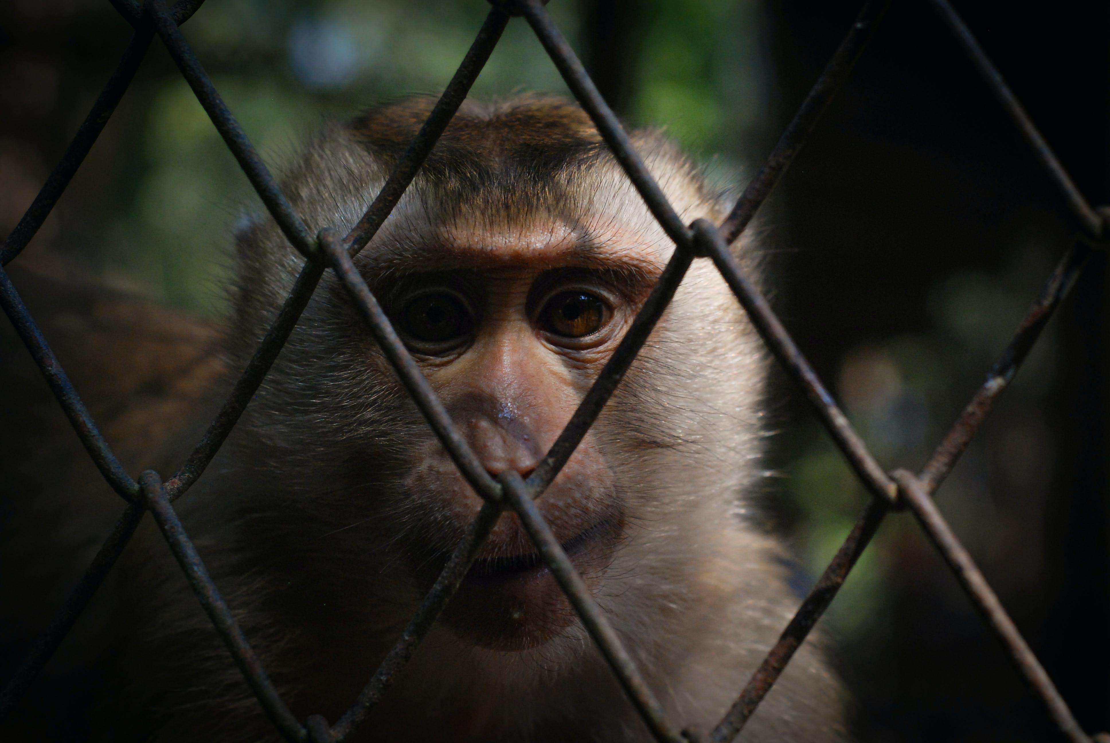 Free stock photo of monkey