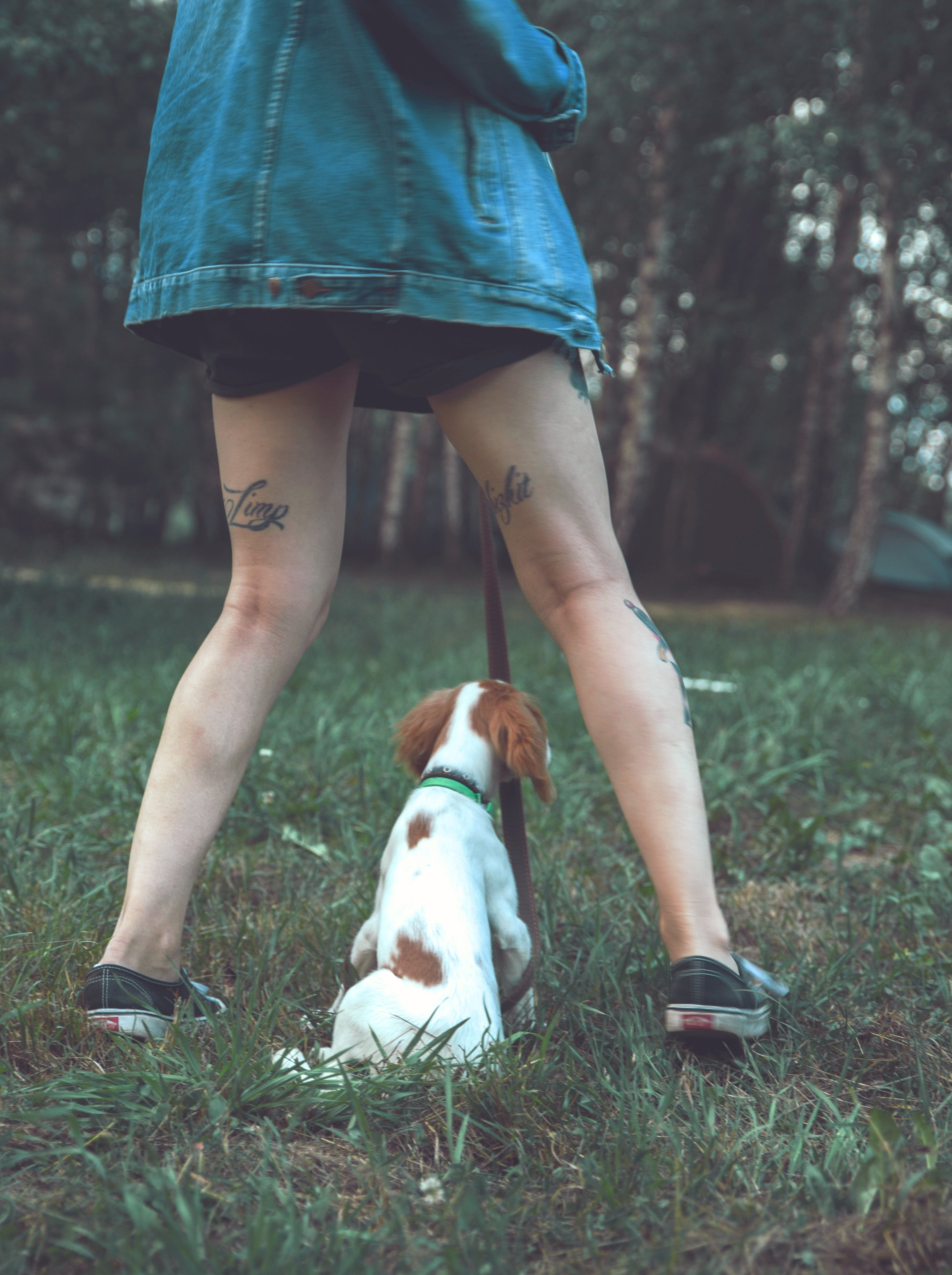 Free stock photo of denim, dog, foot, forest