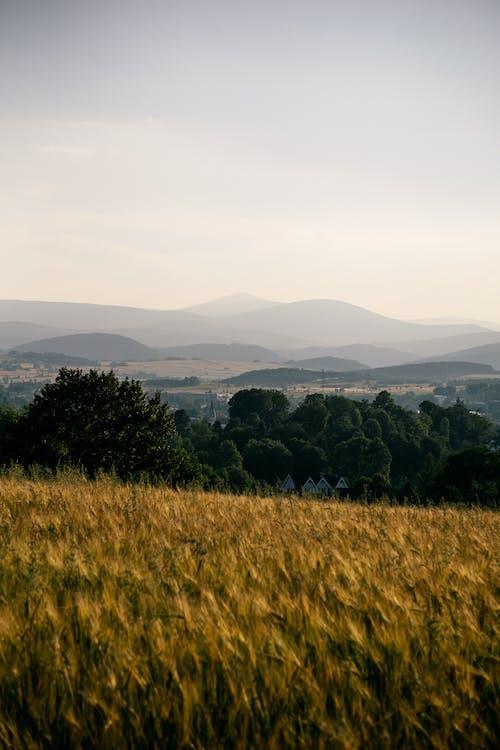 denní světlo, farma, hory