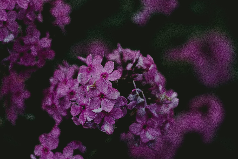Pink Broad Petaled Flower