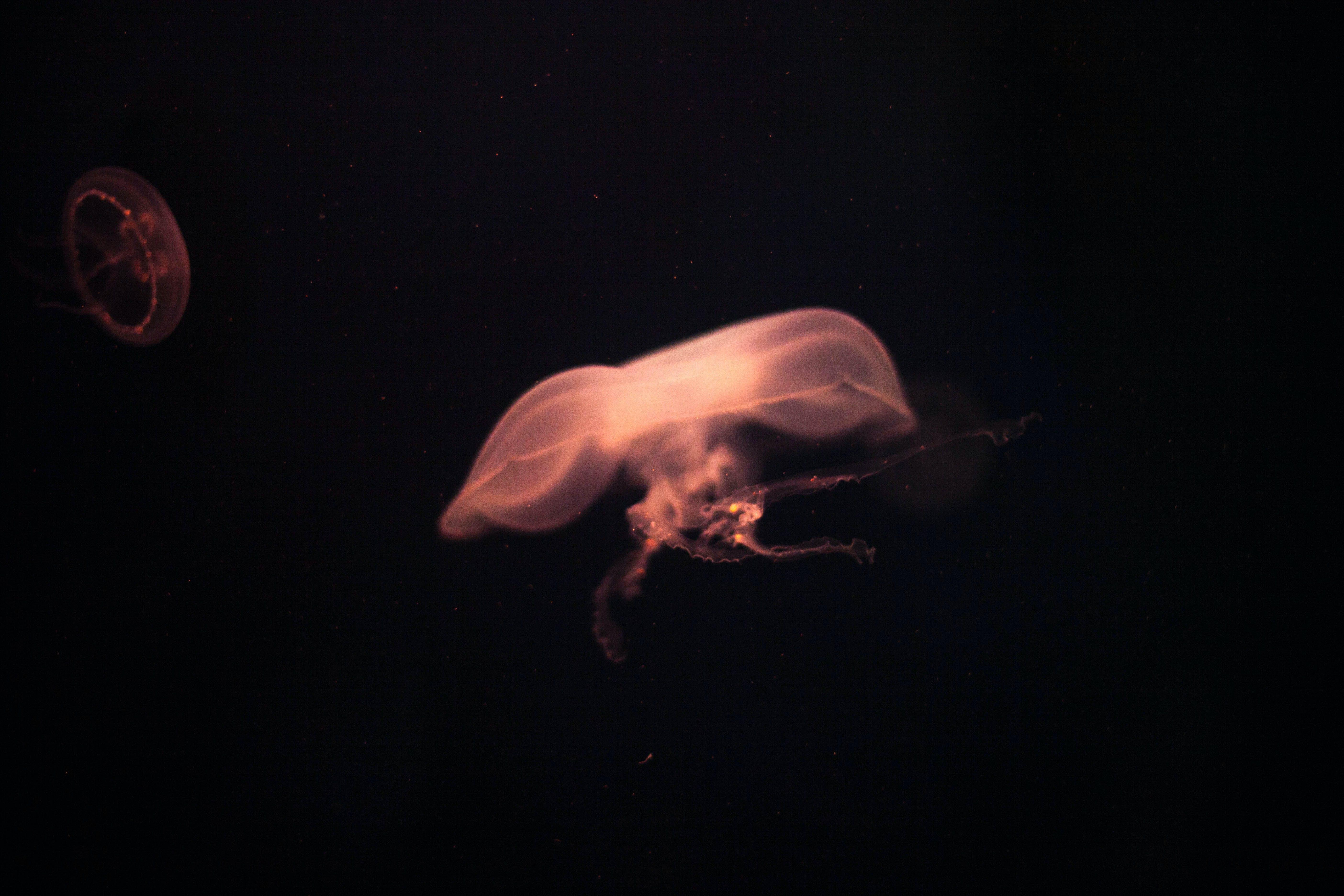 Free stock photo of medusa