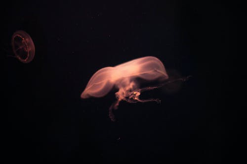 Foto stok gratis medusa