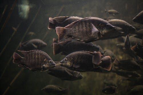 Foto stok gratis akuarium, tangki ikan