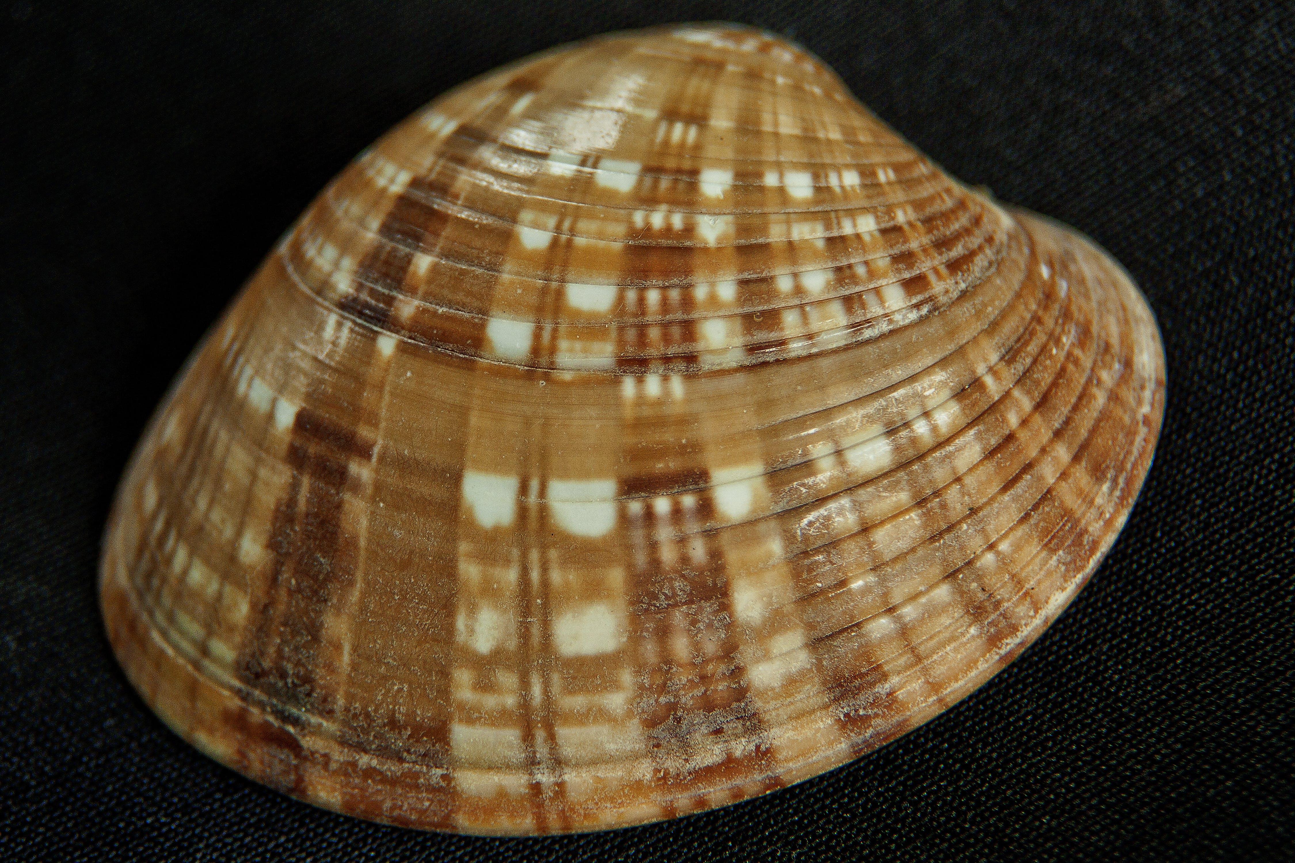 Foto profissional grátis de conchas do mar