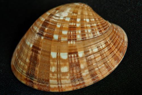 Fotos de stock gratuitas de conchas de mar