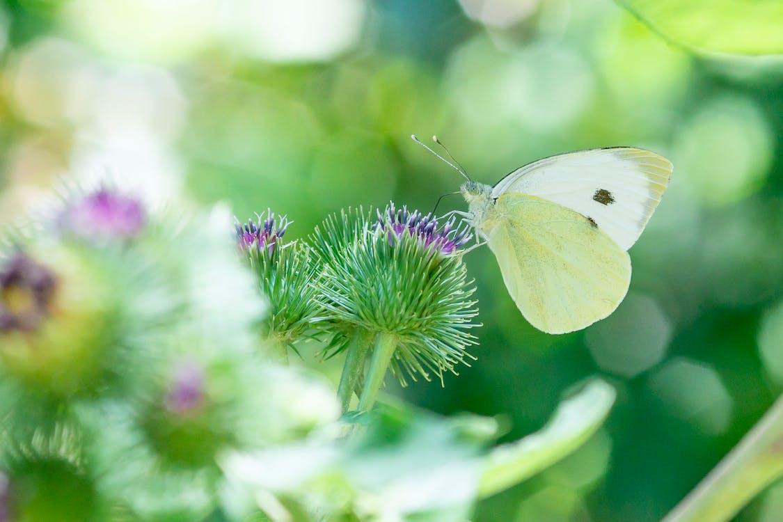곤충, 꽃, 나비