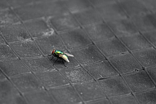 多彩的生活, 天性, 害蟲, 專注 的 免費圖庫相片