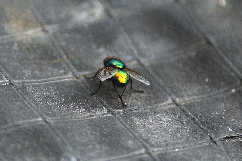 Δωρεάν στοκ φωτογραφιών με αστική μύγα, εστιάζω, ζωή του σφάλματος, λεπτομερής