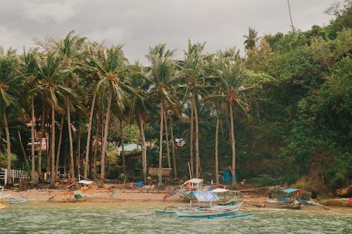 Бесплатное стоковое фото с активный отдых, берег, деревья, дневной свет