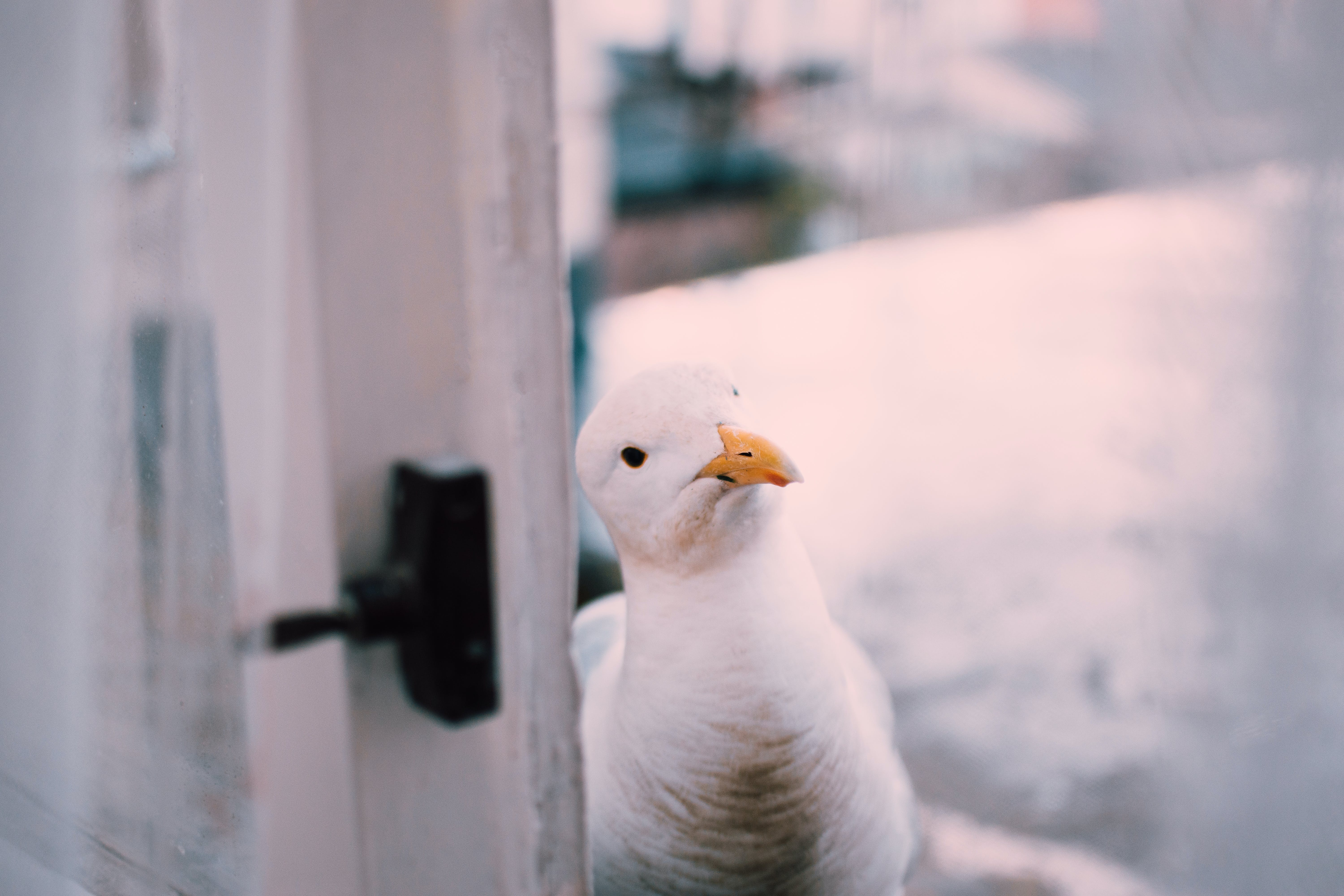 Selective Focus Photography Of Herring Gull Beside Window