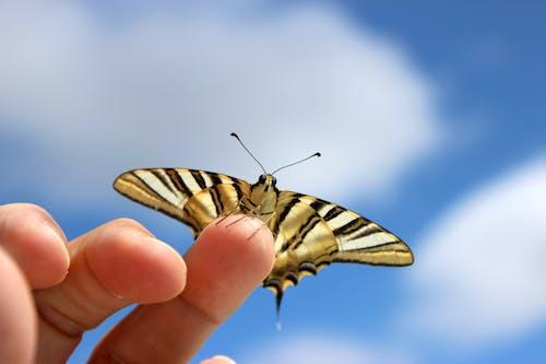 乐观, 天性, 昆蟲, 蝴蝶 的 免费素材照片
