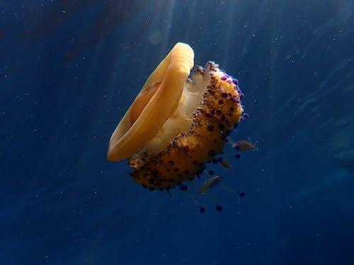 海上生活 的 免费素材照片
