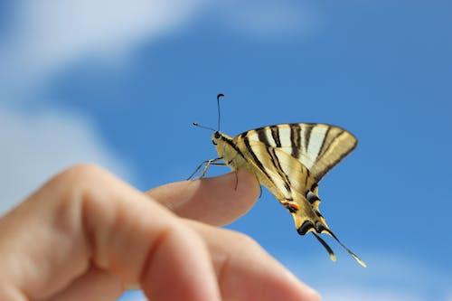 天性, 昆蟲, 蝴蝶 的 免费素材照片