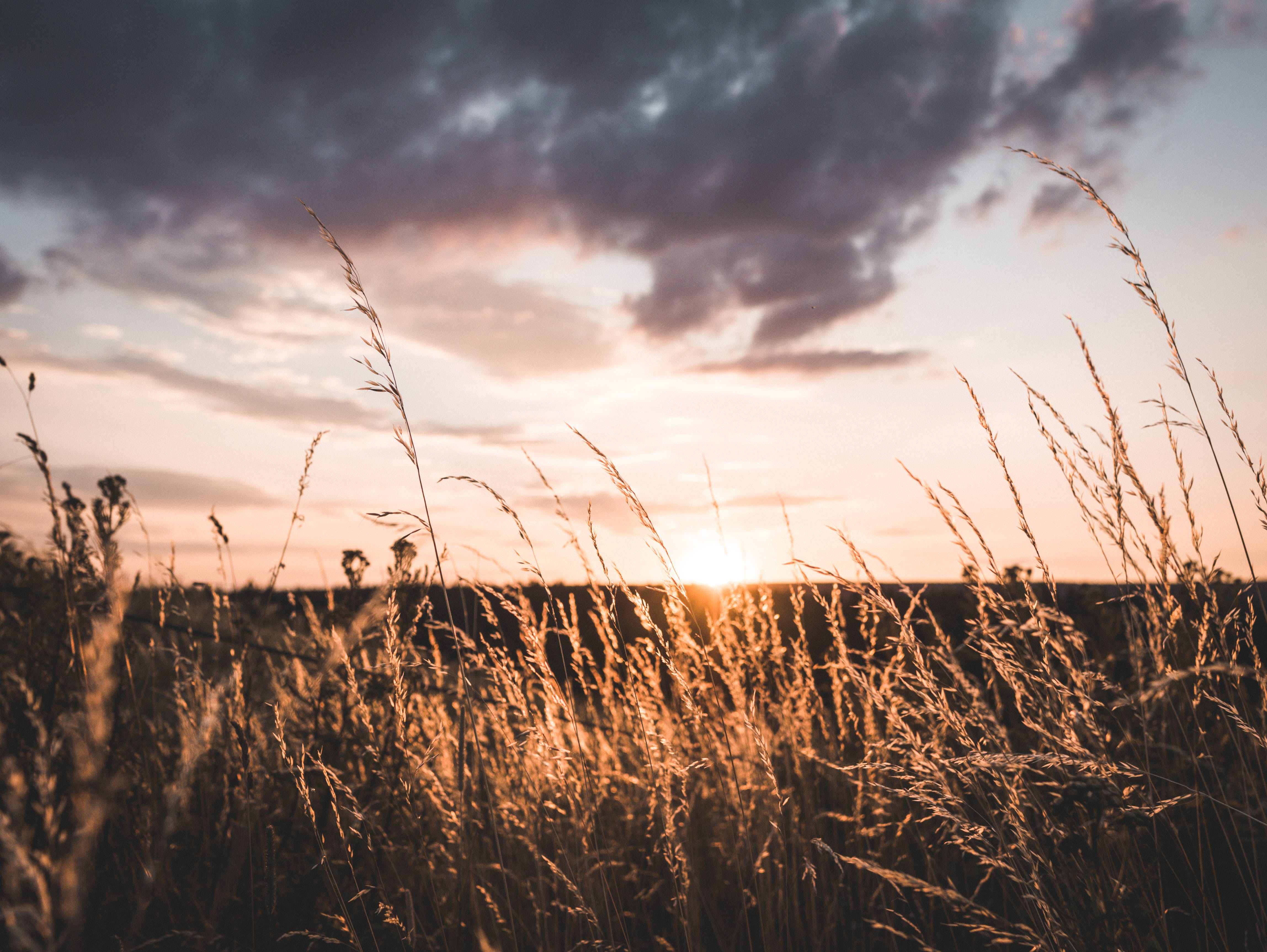 Landscape Photo of Brown Grains during Sunset