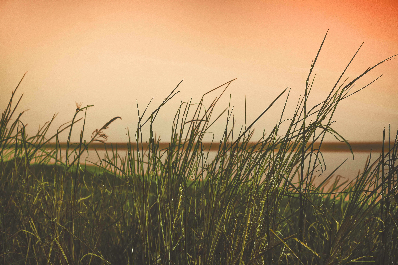 Free stock photo of golden sunset, grass field, lake, nature