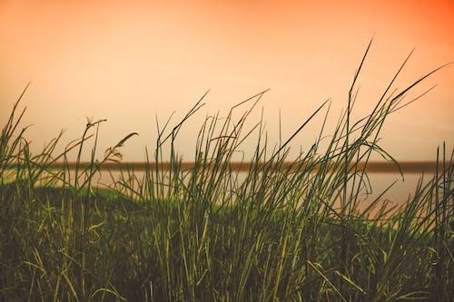 Gratis arkivbilde med gressfelt, himmel, natur