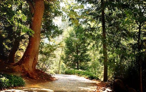 オレゴン, トレイル, ハイキング, フローラの無料の写真素材