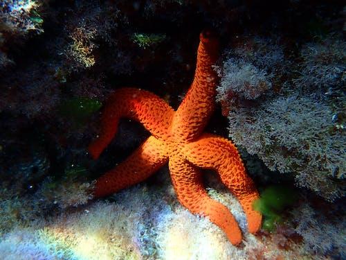 水下, 海上生活, 海星 的 免费素材照片