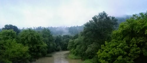 Free stock photo of country, fog, kentucky