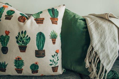 Ilmainen kuvapankkikuva tunnisteilla huone, huonekalu, kaktuksenkukka, kaktukset