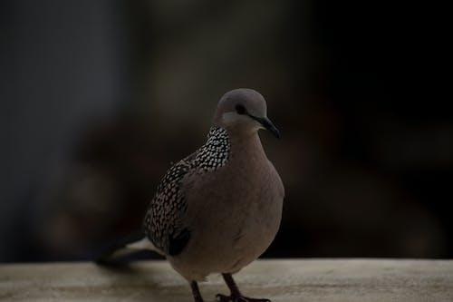Fotos de stock gratuitas de #pájaro, fauna, Paloma