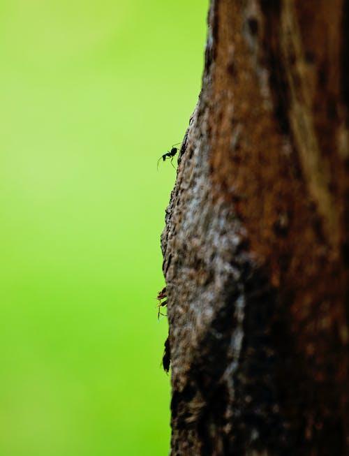 Fotos de stock gratuitas de #árbol, bañador, fauna, insectos