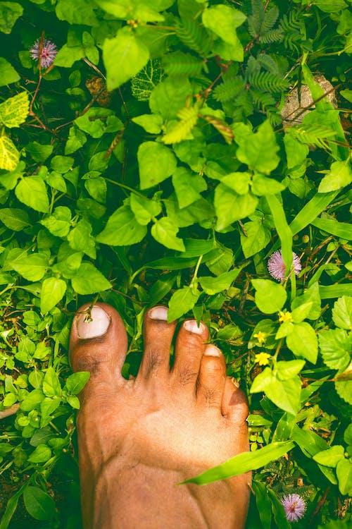 Fotos de stock gratuitas de madre naturaleza, pata, paz, pies