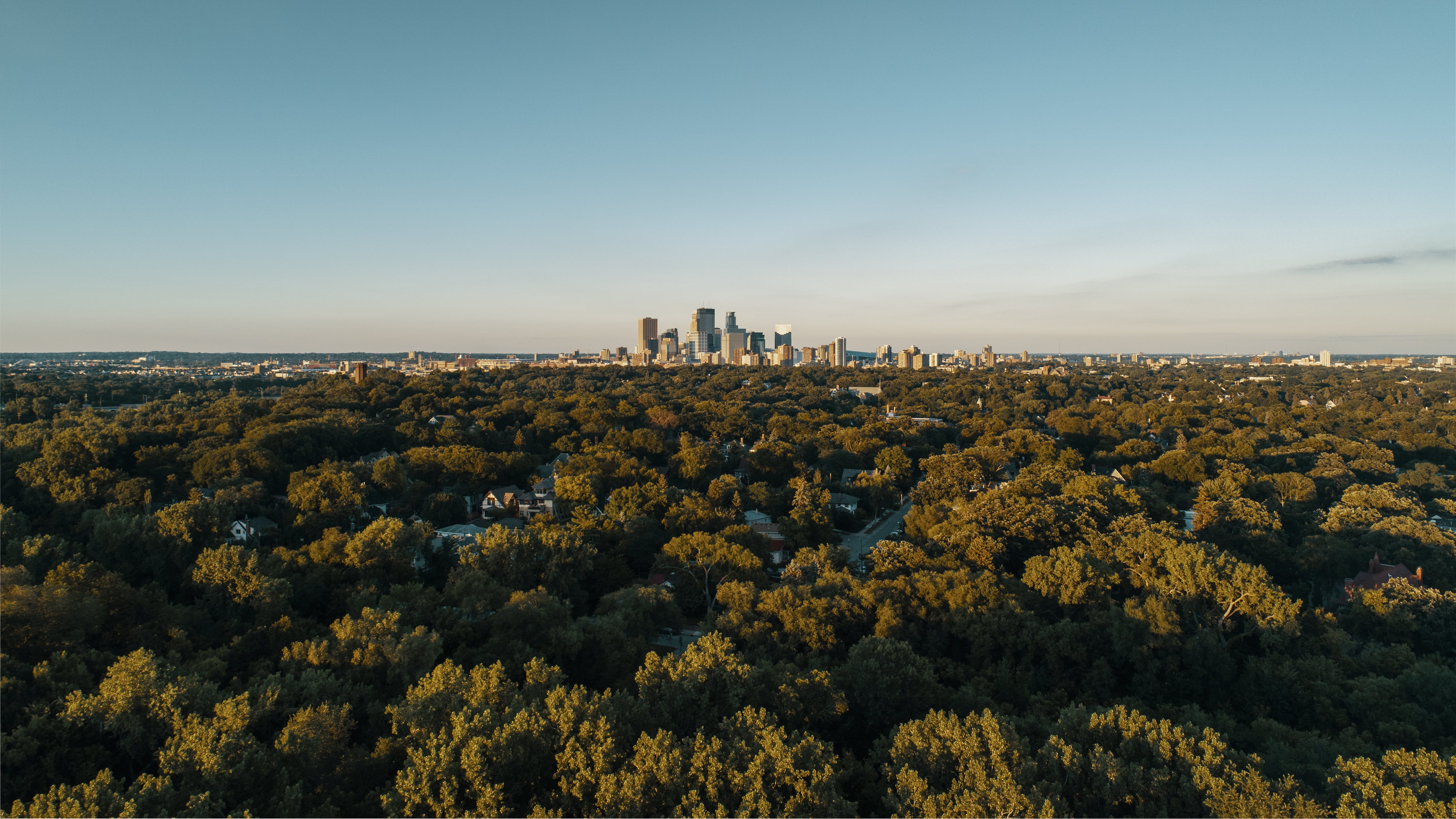 Aerial View Photography of Green Trees