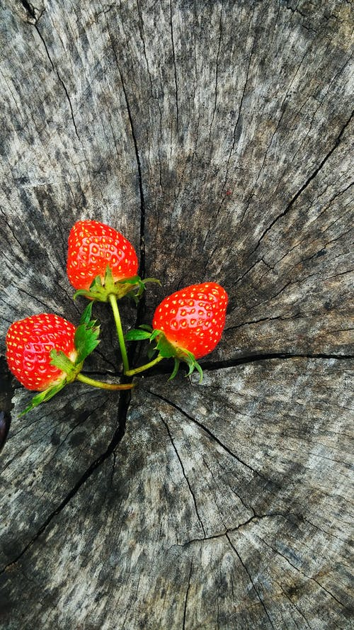 Free stock photo of berry, fruit, health