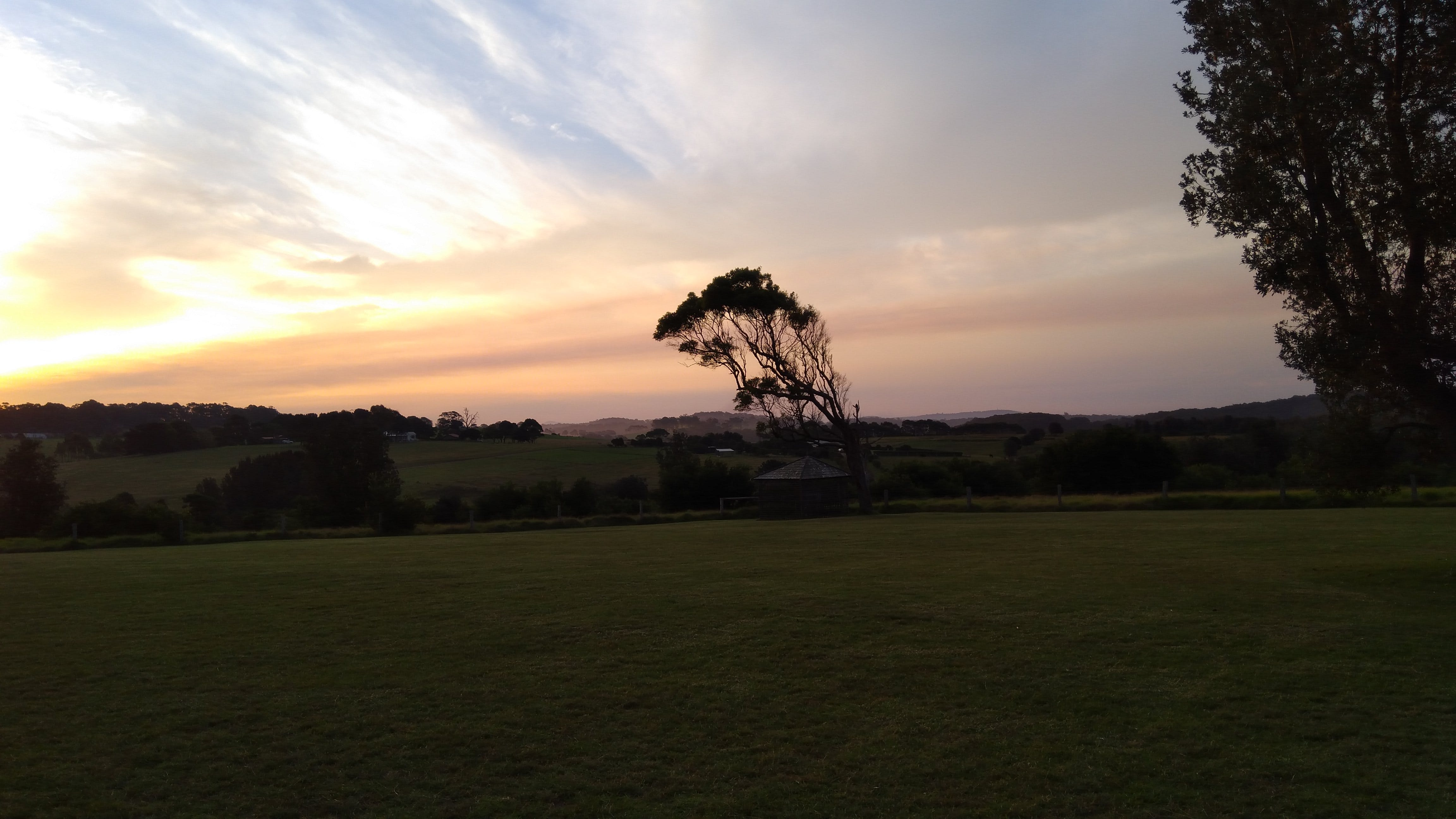 Free stock photo of golden sunset, nature, tree