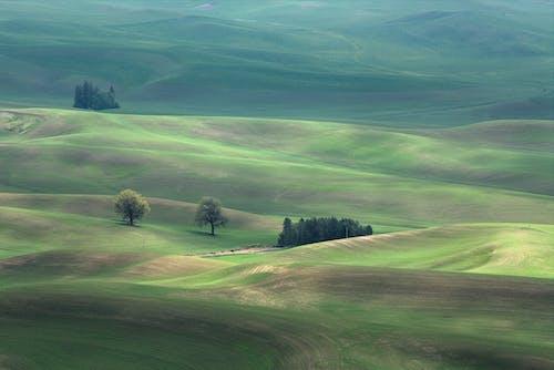 Imagine de stoc gratuită din arbori, copaci, dealuri, iarbă
