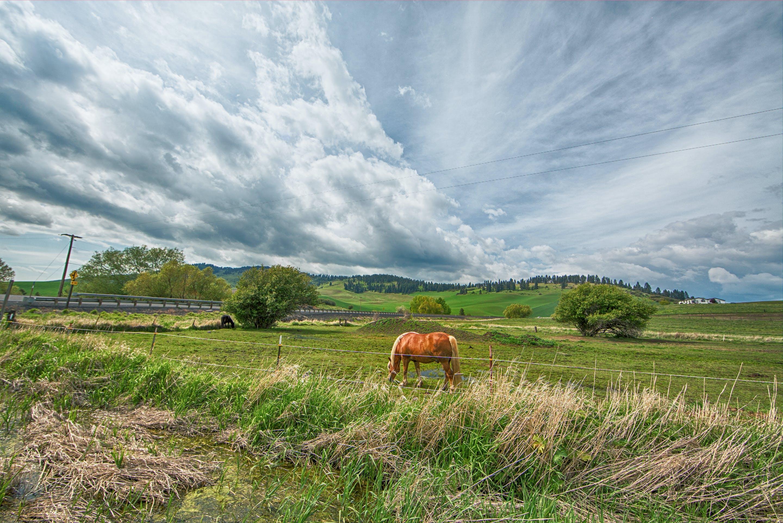 Orange Horse on Green Grass Field Under Gray Clouds
