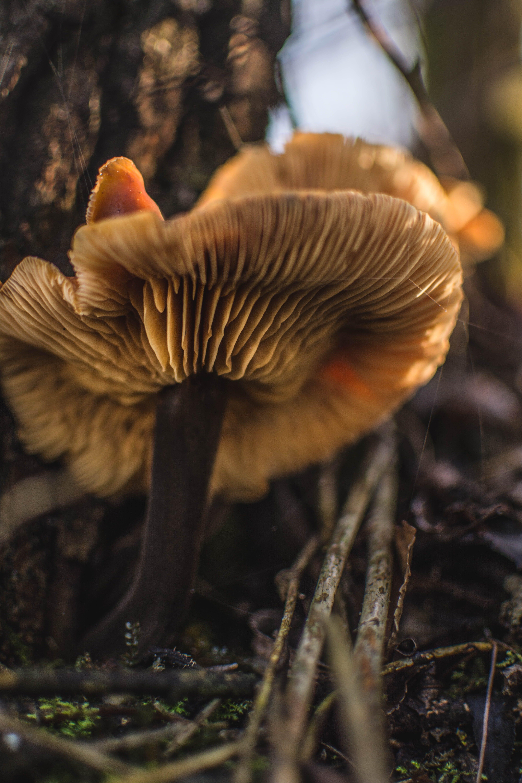 Macro Shot Photography of Brown Mushroom