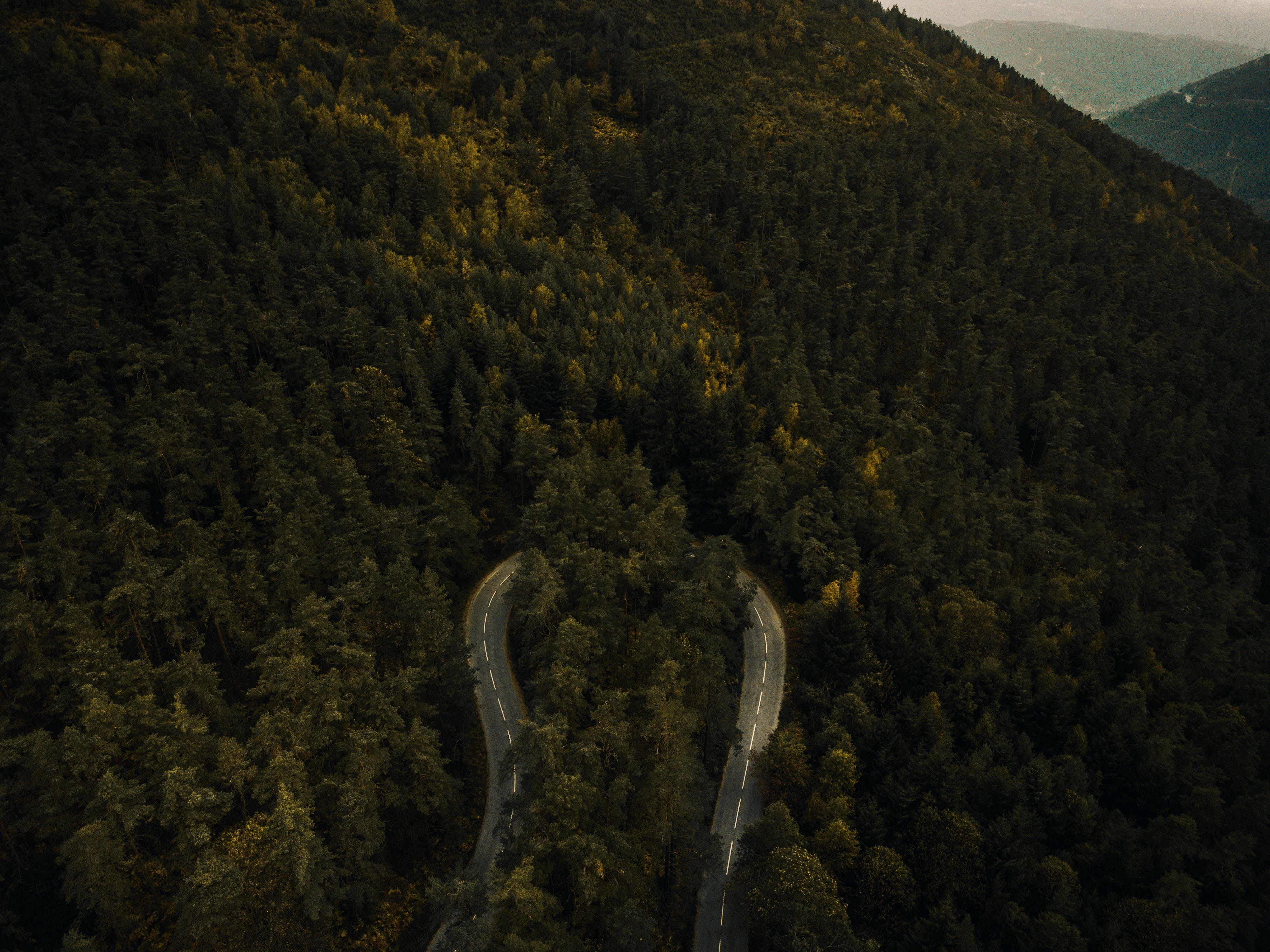 Free stock photo of road, nature, trees, mountain