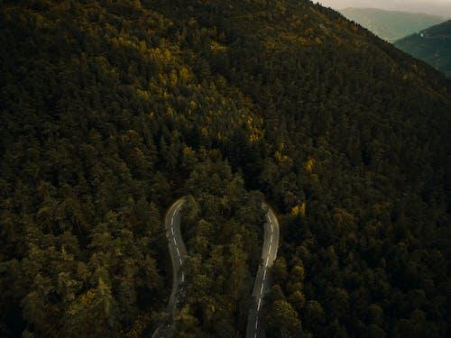 Ingyenes stockfotó drón, fák, hegy, természet témában