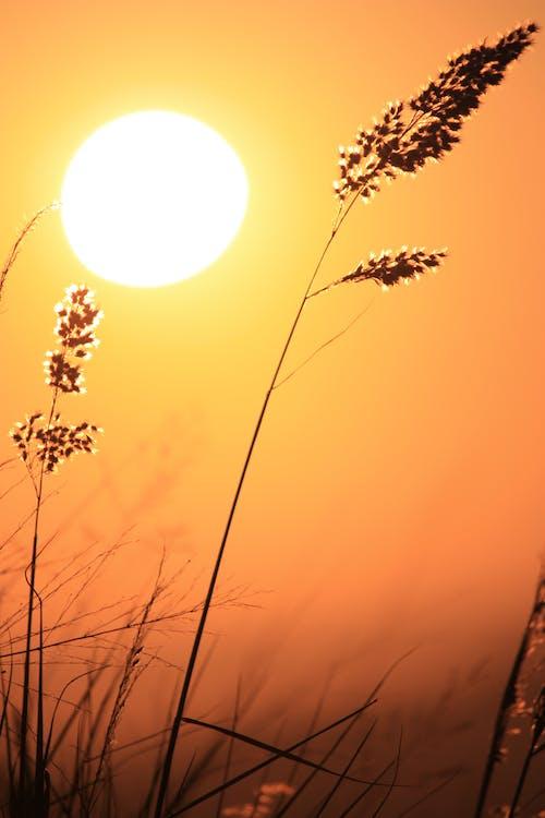 Kostnadsfri bild av gräs, moder natur, natur, soluppgång